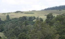 Wenlock Downs, Ooty