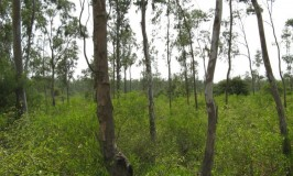 travel-ranebennur-black-buck-sanctuary2
