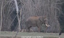 Wild Animals of Kabini Wildlife Sanctuary