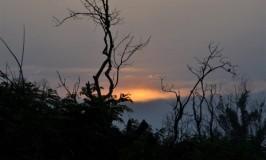 Sunset in Bandipur