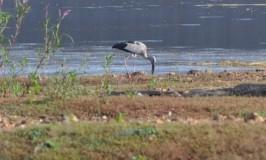 Birds of Markonahalli Dam