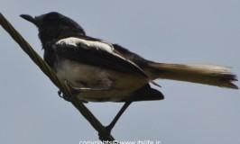 Birds of Byndoor