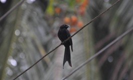 Birds of Andaman and Nicobar Islands