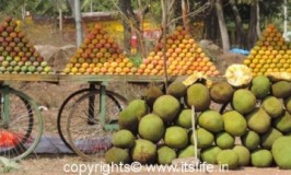 Mango and Jackfruit Season