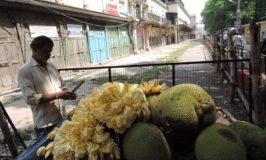 Jackfruit seller