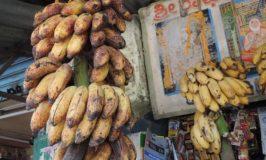 Nanjanagudu Rasabale – Banana variety from Nanjangud