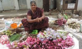 Water Lily Seller