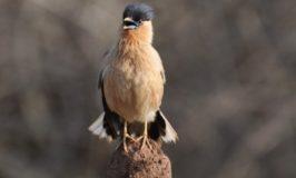 Birds of Bandipur